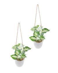 Green & White Leaf Hanging Plants