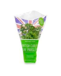 Potted Curly Leaf Parsley