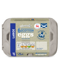6 Large Scottish Eggs
