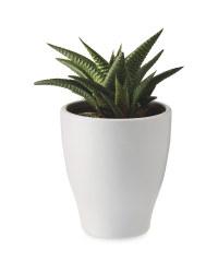 Mini Succulent In Ceramic