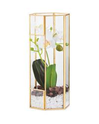 Faux White Orchid In Glass Terrarium