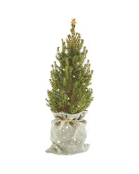Perfect Christmas Picea Tree in Bag
