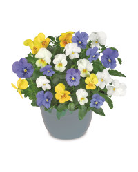 The Green Garden Viola Planters