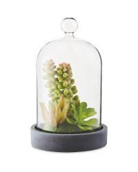 Succulent Cloche Terrarium