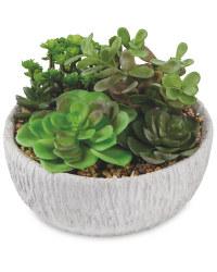 Rustic Container Succulent