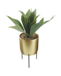Kirkton House Aloe In Gold Pot