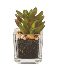 Artificial Multi-Tone Succulent