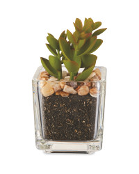 Artificial Cup-Leaf Succulent