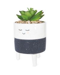 Grey Freckle Smiley Face Pot Plant