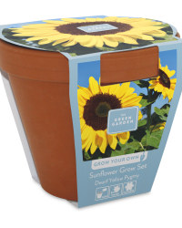 Grow Your Own Sunflower/Sweet Pea