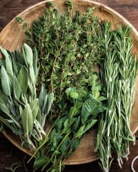 The Green Garden Herb Planter