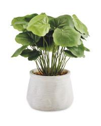Dollar Leaf Artificial Plant