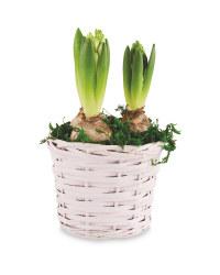 Hyacinth Willow Basket