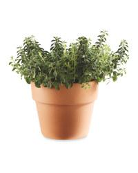 Italian Herbs In Terracotta