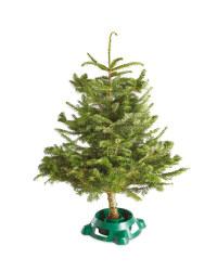 Medium Nordman Fir Christmas Tree