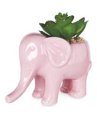 Pink Elephant Pot Plant