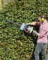 Scheppach Petrol Hedge Trimmer