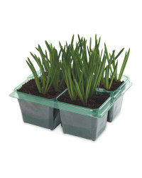 Spring Bulb Collection 4 Pack