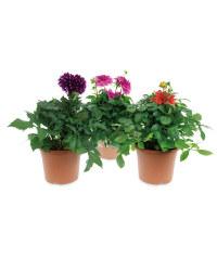The Green Garden Summer Patio Pot