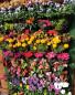 Gardenline Vertical Planters