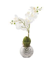 Kirkton House White Faux Orchid